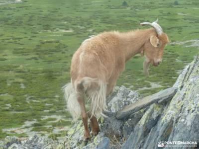 El Ocejón-Reserva Nacional Sonsaz;forros polares montaña turismo de naturaleza en españa pueblo d
